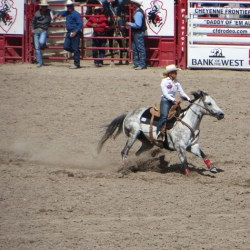 Rodeo – Delia  Plessberger