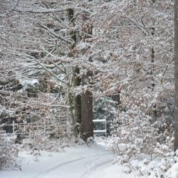Christina Koller – Sankt Johann, Let it snow