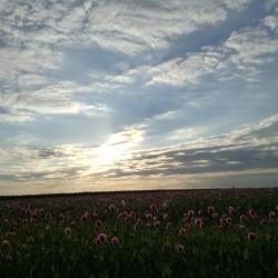 Sonnenuntergang - Annika Zwinger